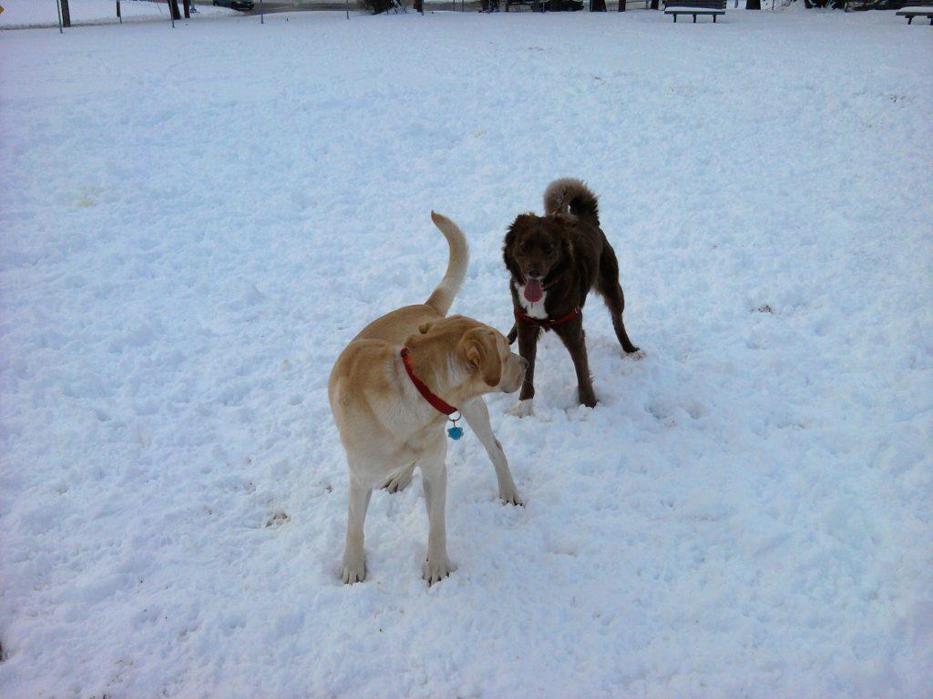 Dogs at Dog Park Enjoying a Dog Friendly March Break Activity